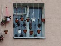 Muitos potenciômetros de flor na janela dos plantadores foto de stock