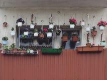 Muitos potenciômetros de flor na janela dos plantadores fotos de stock royalty free