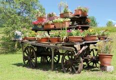 muitos potenciômetros das flores no prado no vagão velho Imagem de Stock