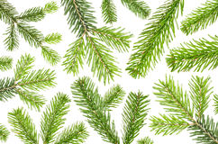 Muitos ramos verdes do abeto antes do fundo branco Foto de Stock Royalty Free