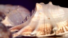 Muitos shell diferentes do mar no preto, rotação filme
