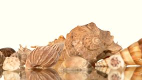 Muitos shell do mar no branco, rotação, reflexão vídeos de arquivo