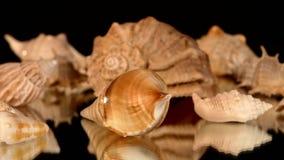 Muitos shell do mar no preto, rotação, reflexão video estoque