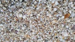 Muitos shell na praia Foto de Stock