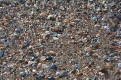 Muitos shell na praia da areia Imagem de Stock