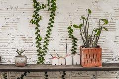Muitos tipos de potenciômetros da planta que incluem os modelos da casa colocados nas prateleiras feitas da madeira velha imagem de stock