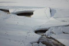 Muitos traços em gelo rachado Fotografia de Stock