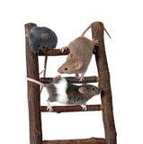 Muizen op stuk speelgoed trap Stock Afbeelding
