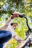 Mujer apta de los jóvenes que monta una bicicleta en un día soleado del otoño Imagenes de archivo