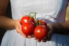 Mujer asiática que sostiene los tomates rojos Imágenes de archivo libres de regalías
