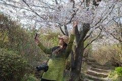Mujer asiática que toma el selfie con las flores de cerezo Fotos de archivo