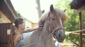Mujer atractiva joven que cepilla el caballo negro en el prado almacen de metraje de vídeo