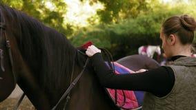 Mujer atractiva joven que prepara el caballo del marrón oscuro para un entrenamiento del paseo de la doma Mujer que coloca una ma metrajes