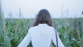 Mujer bonita en campo del maíz joven metrajes