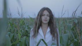 Mujer bonita en campo del maíz joven almacen de metraje de vídeo