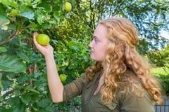Mujer caucásica joven que sostiene la manzana en árbol Foto de archivo