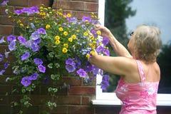 Mujer caucásica que tiende a su cesta de la flor fotos de archivo libres de regalías