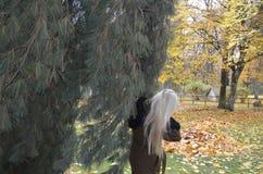 Mujer cerca del árbol en el parque del otoño Imágenes de archivo libres de regalías
