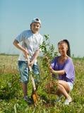 Mujer con el árbol de la configuración del hijo del adolescente Fotos de archivo