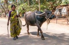 Mujer con el búfalo Imágenes de archivo libres de regalías