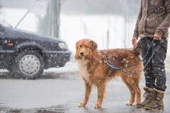 Mujer con el paseo del perro en invierno en el camino fotografía de archivo libre de regalías