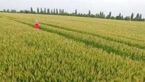 Mujer con el pelo rubio en un runsin rojo del vestido el campo con trigo almacen de metraje de vídeo