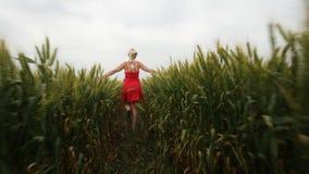 Mujer con el pelo rubio en un vestido rojo que camina en el campo con trigo almacen de metraje de vídeo