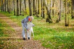 Mujer con el perro que camina en el callejón del abedul, día soleado del otoño Fotografía de archivo libre de regalías