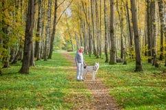 Mujer con el perro que camina en el callejón del abedul, día soleado del otoño Foto de archivo