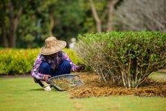 Mujer con el trabajo de la herramienta que cultiva un huerto Foto de archivo libre de regalías
