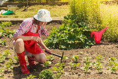 Mujer con la herramienta que cultiva un huerto que trabaja en jardín Imagenes de archivo