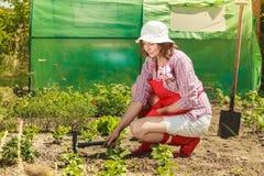 Mujer con la herramienta que cultiva un huerto que trabaja en jardín Imágenes de archivo libres de regalías