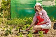 Mujer con la herramienta que cultiva un huerto que trabaja en jardín Fotos de archivo libres de regalías
