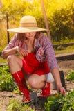 Mujer con la herramienta que cultiva un huerto que trabaja en jardín Fotografía de archivo libre de regalías