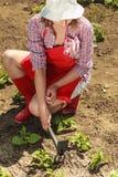 Mujer con la herramienta que cultiva un huerto que trabaja en jardín Fotografía de archivo