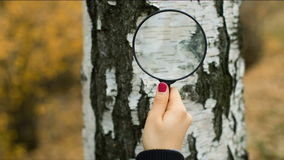 Mujer con la lupa que explora un árbol almacen de metraje de vídeo