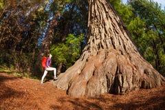 Mujer con la mochila cerca del árbol grande, secoya Fotografía de archivo libre de regalías