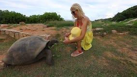 Mujer con la tortuga gigante almacen de video