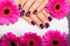 Mujer con los clavos púrpuras manicured hermosos Fotos de archivo
