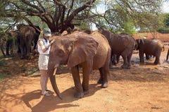 Mujer con los elefantes africanos adoptados del bebé en David Sheldrick Wildlife Trust en el parque nacional de Tsavo, Kenia Imagen de archivo