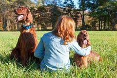 Mujer con los perros de Irish Setter Foto de archivo