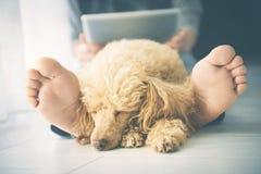 Mujer con su perro en casa Fotos de archivo