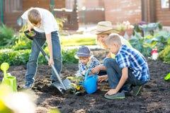 Mujer con tres hijos de los niños que plantan un árbol y que lo riegan junto en jardín Fotografía de archivo libre de regalías