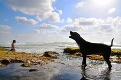 Mujer con un perro Foto de archivo libre de regalías