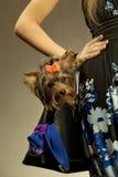 Mujer de Glamor con el terrier de Yorkshire Foto de archivo libre de regalías