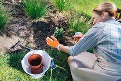Mujer de la familia que realiza actividades de la horticultura en su fin de semana libre imagen de archivo libre de regalías