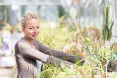 Mujer de los floristas que trabaja en invernadero Imagenes de archivo
