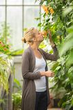 Mujer de los floristas que trabaja en invernadero Fotografía de archivo