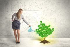 Mujer de negocios que riega un árbol verde creciente de la muestra de dólar fotos de archivo libres de regalías