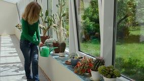 Mujer de riego del cactus almacen de video